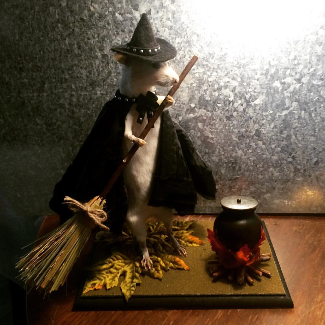 witch-rat
